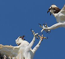 Talons by Rob Lavoie