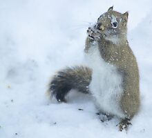 Eating Lunch on a Snowy Afternoon by Megan Noble