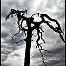 Ridge Road Tree by Loewin