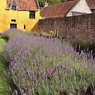 Culross Palace by biddumy