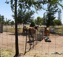 horses in yard by victoria miller