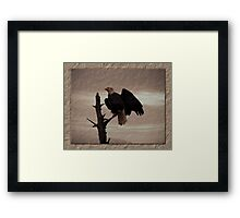 One Tree, One Eagle Framed Print