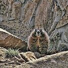 Marmot at Rocky Mountain National Park by Susan Russell
