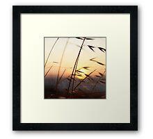 Cottesloe Beach Grass Framed Print