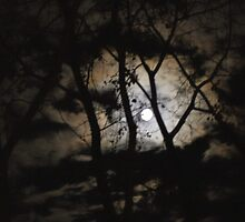 Full moon in the woods by Roger-Cyndy