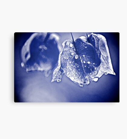 Soaked of tears...Got 3 Featured Works Canvas Print