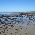Waratah Beach, Seaweed.. by marijkasworld
