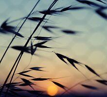 Cottesloe Beach Grass & Sun by Ben Reynolds