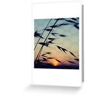 Cottesloe Beach Grass & Sun Greeting Card