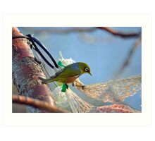 Silvereye In Andrea's Backyard. Gore, South Island, New Zealand. Art Print