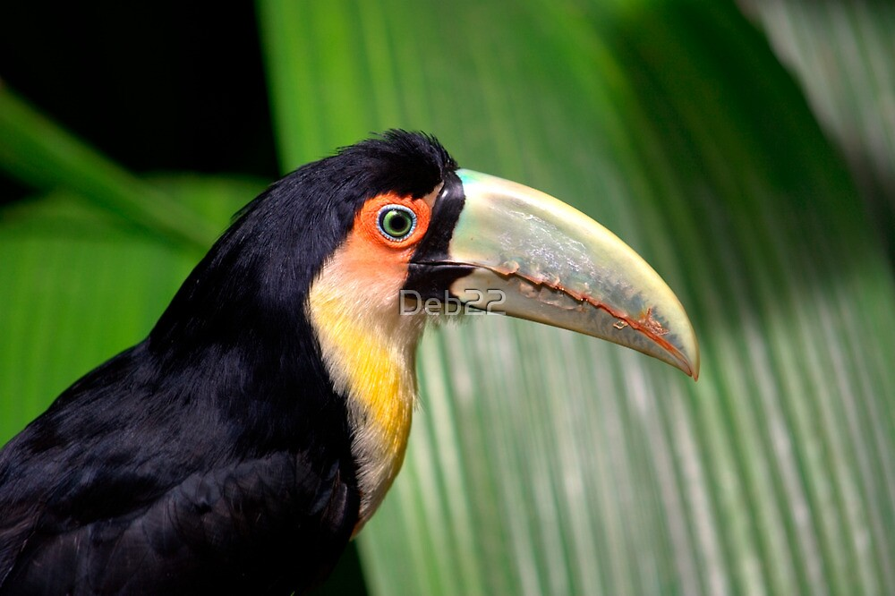 Toucan by Deb22