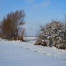 SnowLand by Els Steutel