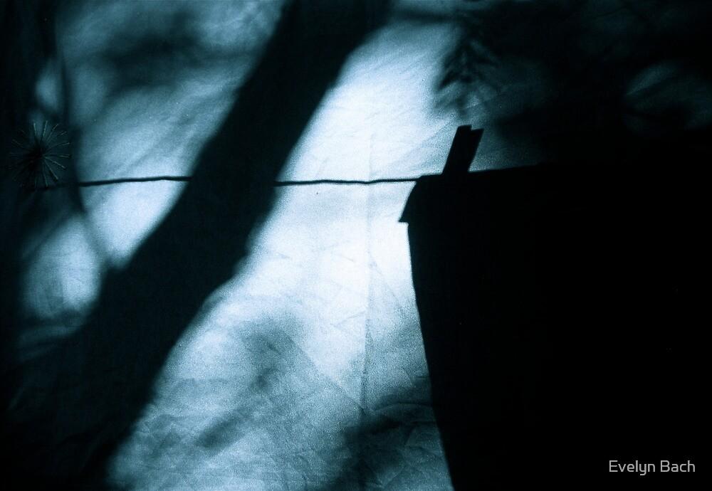 shadowland by Evelyn Bach