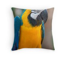 Blue and Gold Macaw, Brazil, South America Throw Pillow