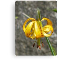 Single wild tiger lily - Mt Rainier Canvas Print