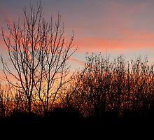 Fiery Skies by BizziLizzy