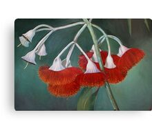 flowering gum (Silver Princess) Canvas Print
