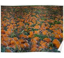 The Great Pumpkin will be here soon! Poster