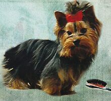 Yorkie Pup by CitC