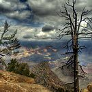 The Raven's Perch by Diana Graves Photography