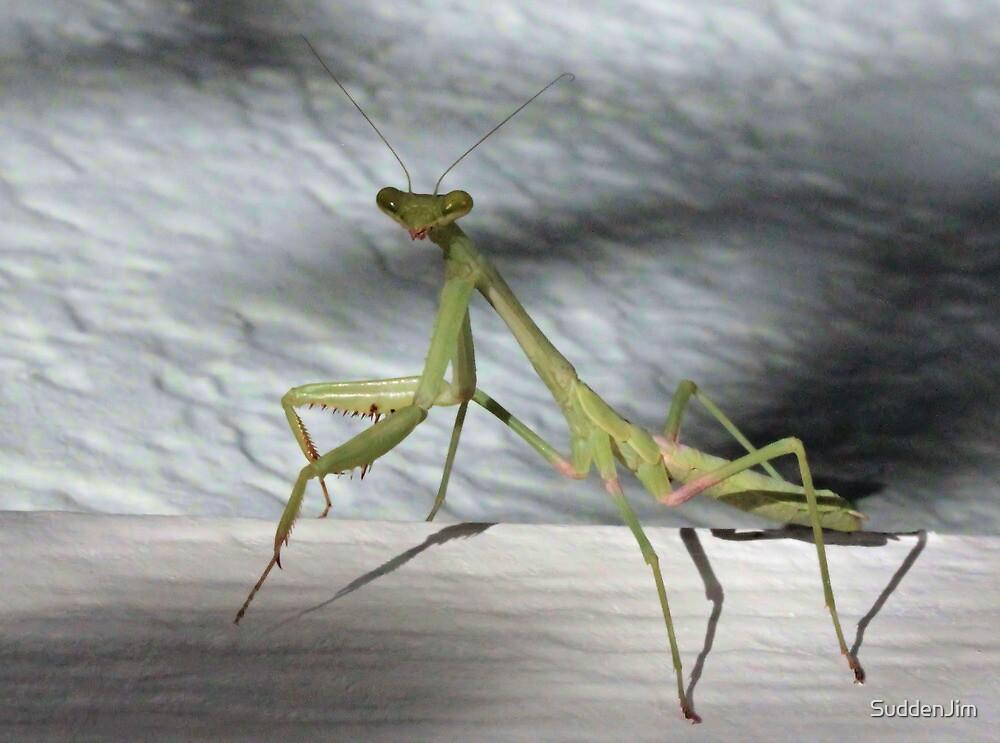 Praying Mantis by SuddenJim