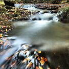 May Beck by MartinWilliams
