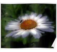 daisy fly Poster