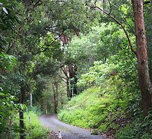 Morning Walk in Tallebudgera Valley by aussiebushstick