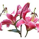 Pink Lilies by jacqi