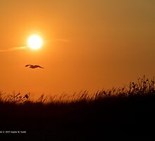 Sun & Seagull | Smith Point, New York  by © Sophie W. Smith