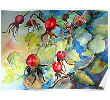 Ruby Red Rose Hips Poster