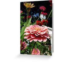 pink zinnias grow in mo's garden Greeting Card