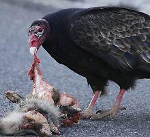 Turkey Vulture by Dennis Cheeseman