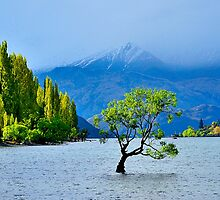 Lake Wanaka by Barry Culling
