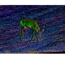 Fantasy Deer Photographic Print