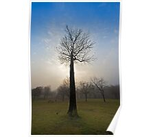 Leafless Poster