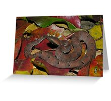 Hump nosed pit viper Greeting Card