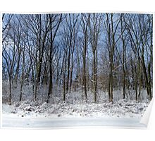 Snowy Scenery Poster