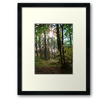 Forest in the Winter sun Framed Print