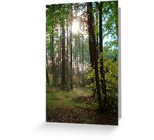Forest in the Winter sun Greeting Card