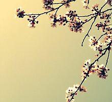 Elegance in bloom II by Joshua Greiner