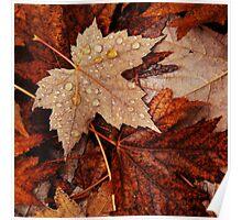 Autumn's Leaf Litter Poster