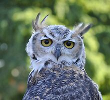 Head-Turning Owl by BB2010