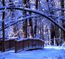 Winter Wonderland by cherylc1