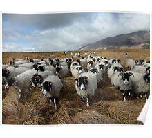 Shepherd - Lake District Poster