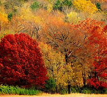 Colors Of The Ozarks by NatureGreeting Cards ©ccwri