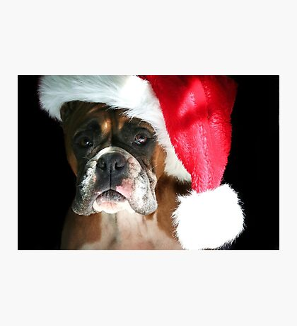 Christmas Boxer dog Photographic Print
