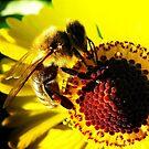 Back-light Bee by Detlef Becher