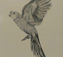 Scruffy - Pale Headed Rosella  by ArtbyRJGMIC