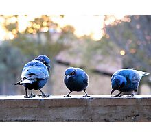 ♪♪ Feed the birds, tuppence a bag ♪♪ Photographic Print